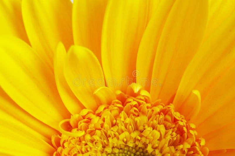 Färben Sie Blumenblumenblattnahaufnahme gelb stockfotos