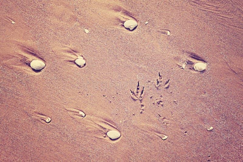 Färben Sie getontes Bild von Seemöwendrucken auf Sand stockfoto