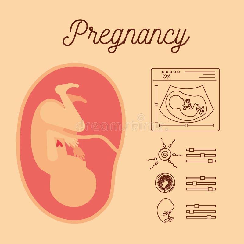 Färben Sie Hintergrund mit 9. Woche des menschlichen Fötusses des Schattenbildes und Ikonenschwangerschaft vektor abbildung