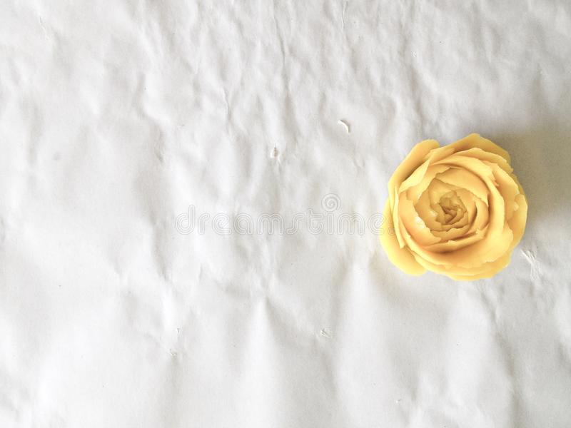 Färben Sie Rosafarbenes gelb lizenzfreies stockfoto