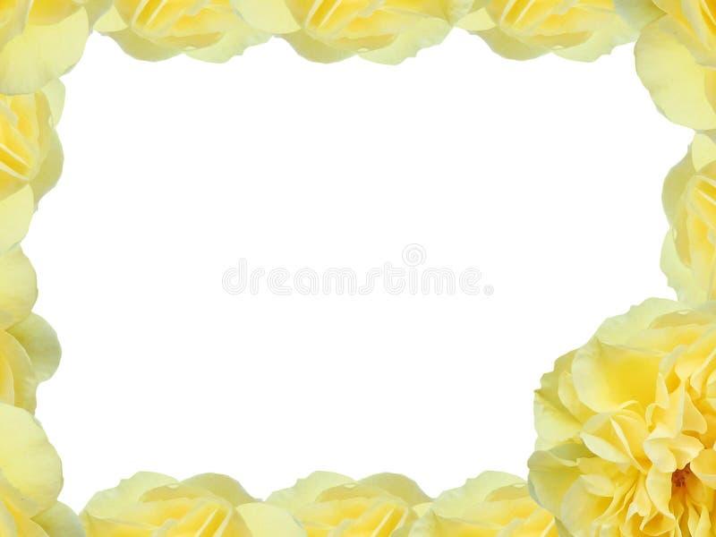 Färben Sie Rose gelb stock abbildung