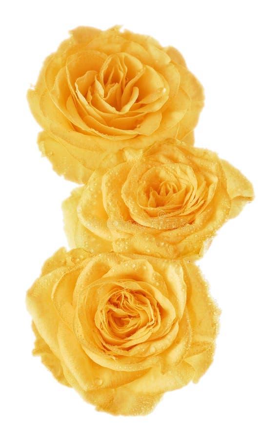 Gelber Rosebud lizenzfreie stockbilder