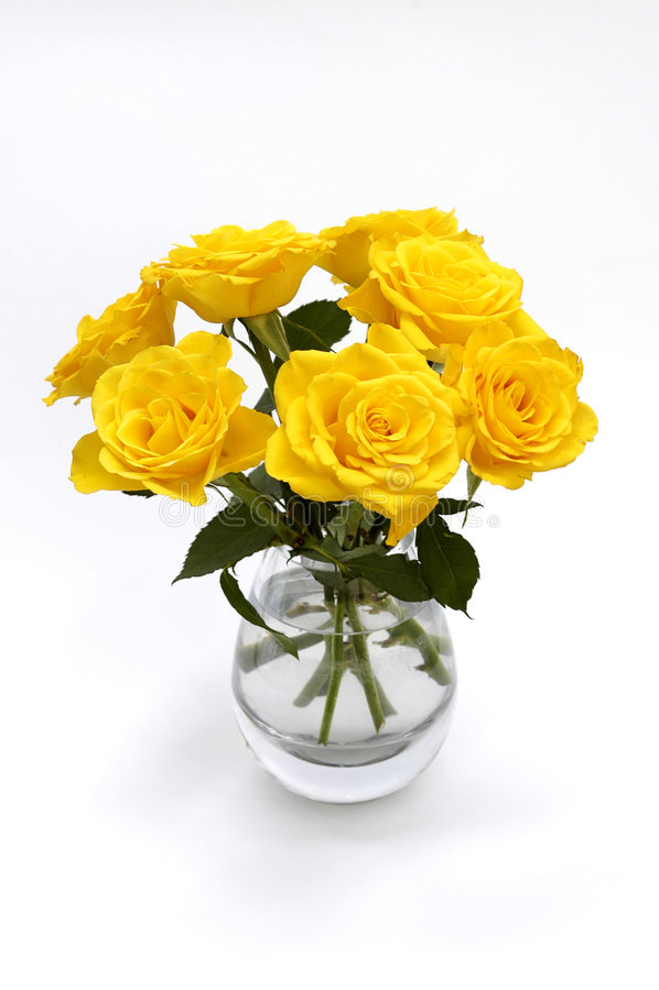 Färben Sie Rosen auf Weiß gelb lizenzfreie stockfotografie