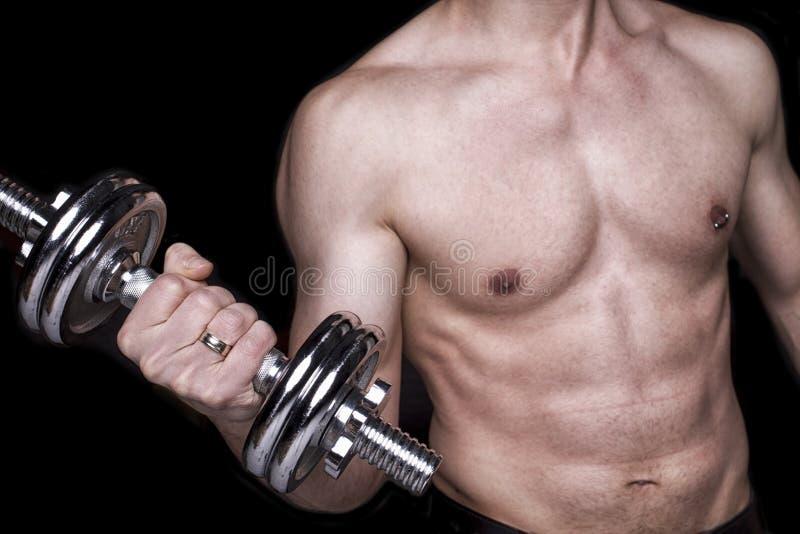Färdig muskulös mankroppsdel, hållhantel arkivfoton