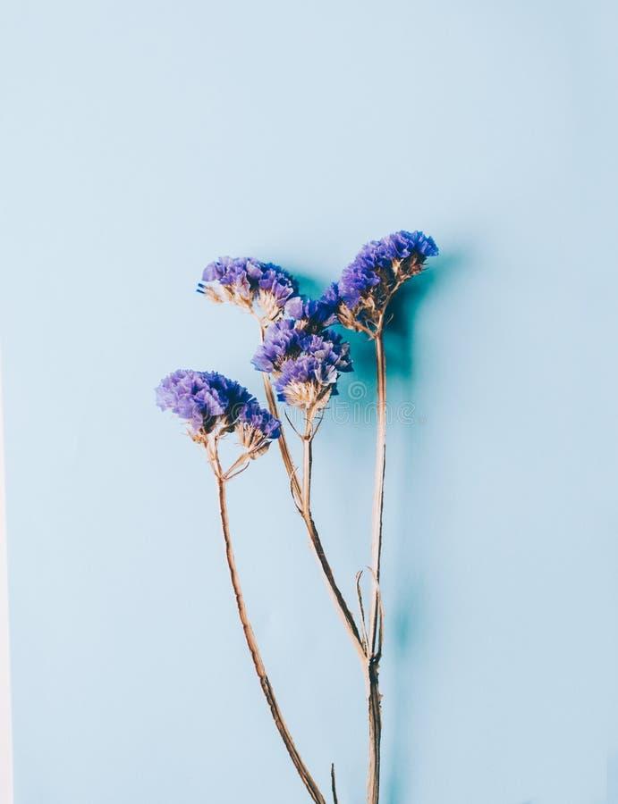 Färg blommar filialer arkivbild