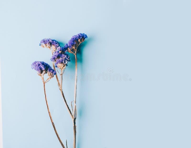 Färg blommar filialer fotografering för bildbyråer