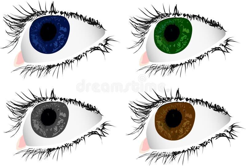 färg eyes kvinna fyra vektor illustrationer