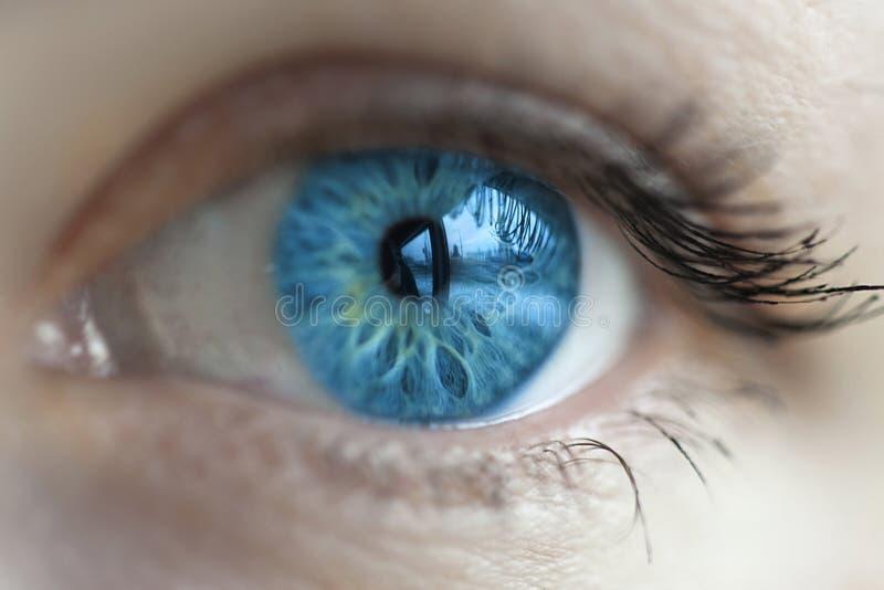 Färg för blått öga för kvinnor royaltyfri fotografi