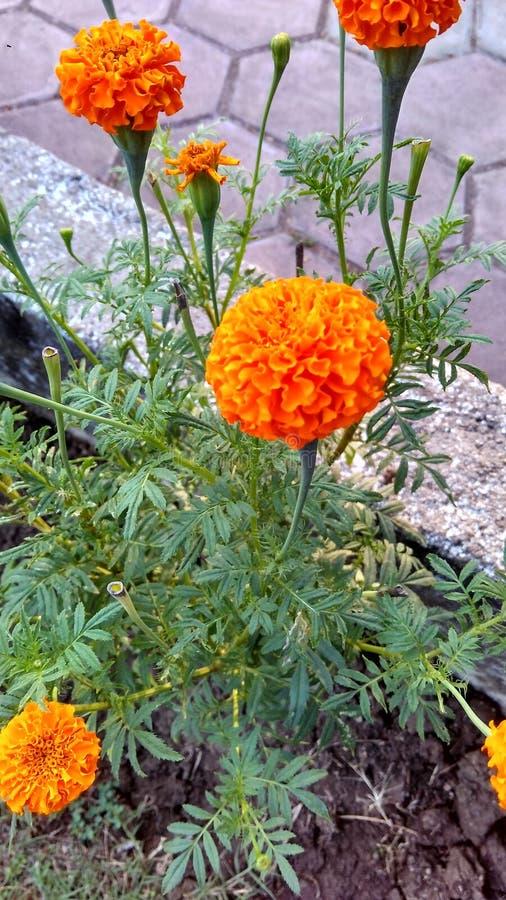 Färg för gräsplan för blommanaturnopeople orange royaltyfria foton