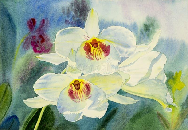 Färg för original- målning för vattenfärg vit av skönhetorkidéblomman vektor illustrationer