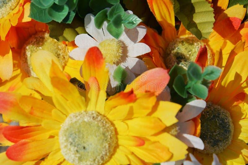 Färg och blommor arkivfoto