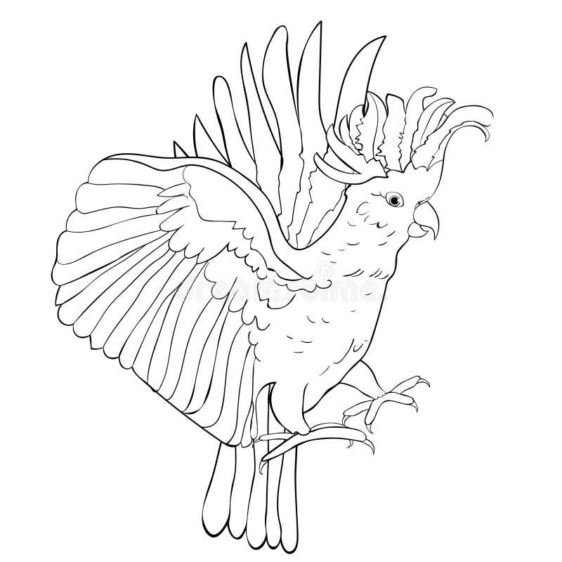 Färga den exotiska incaen för rosa färger för kakaduapapegoja också vektor för coreldrawillustration royaltyfri illustrationer