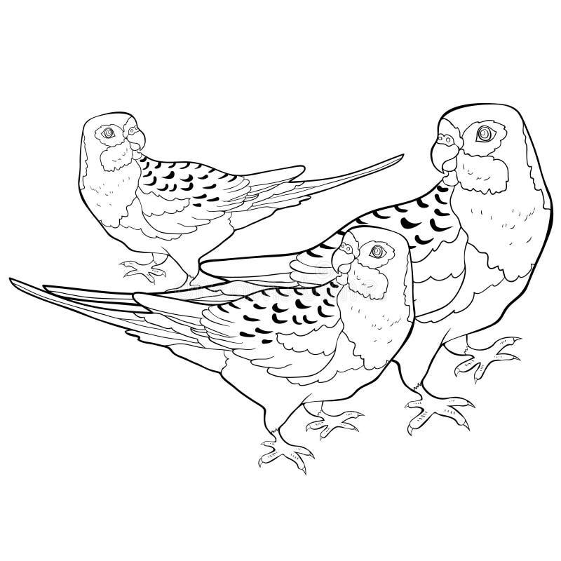Färga exotisk vändkretspapegojaroseella också vektor för coreldrawillustration stock illustrationer