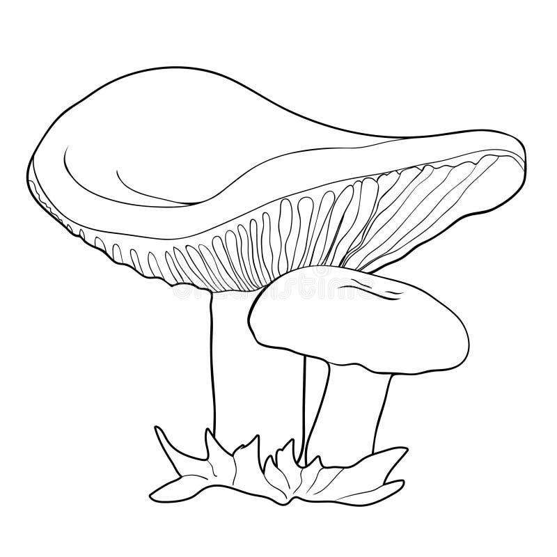 Färga med den naturliga illustrationen för champinjonrussulavektor stock illustrationer