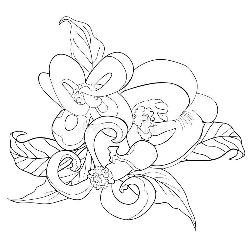 Färga med illustrationen för vektor för Florida skogskornellblomma stock illustrationer