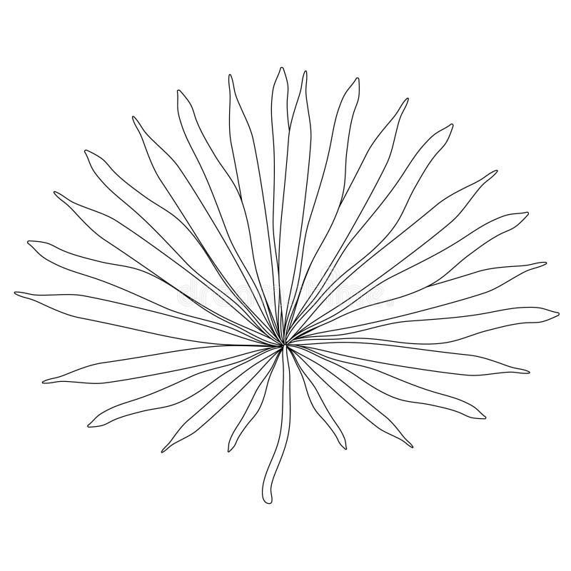 Färga naturliga tropiska palmblad också vektor för coreldrawillustration stock illustrationer