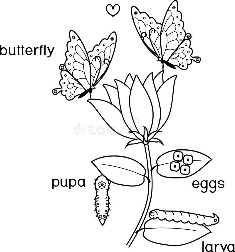 Färga sidan Livcirkulering av fjärilen med titlar vektor illustrationer