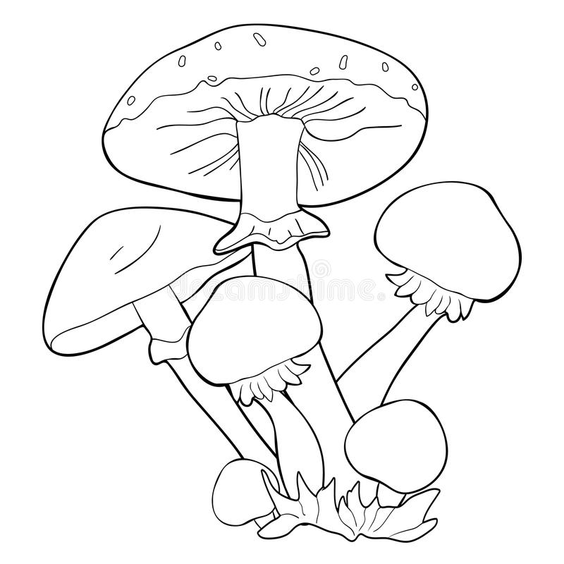 Färga svampen för champinjonhonungagaric också vektor för coreldrawillustration vektor illustrationer