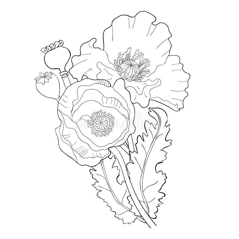 Färga vallmoblommaknoppen med frö också vektor för coreldrawillustration stock illustrationer