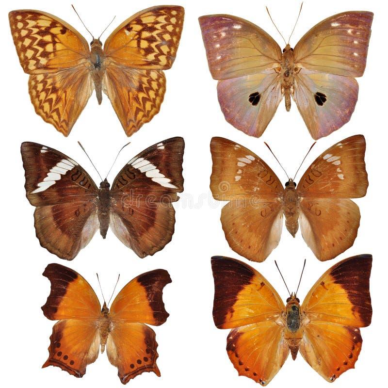 färgad fjärilssamling arkivfoton