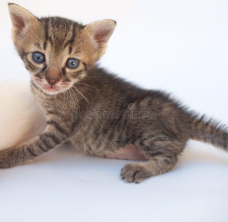 Färgad kattunge arkivfoto