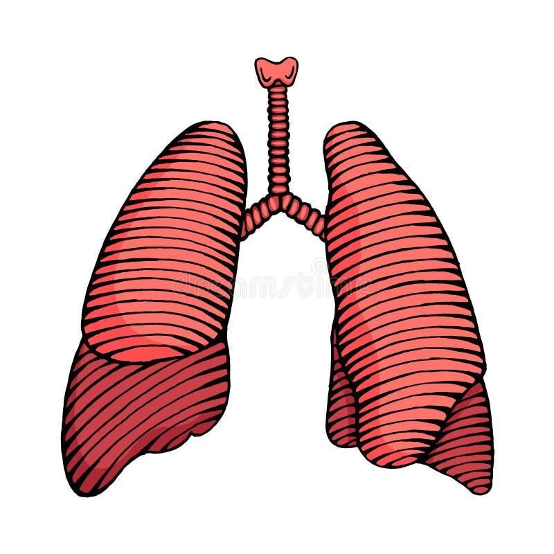 Färgade den utdragna mänskliga lungaillustrationen för handen stock illustrationer