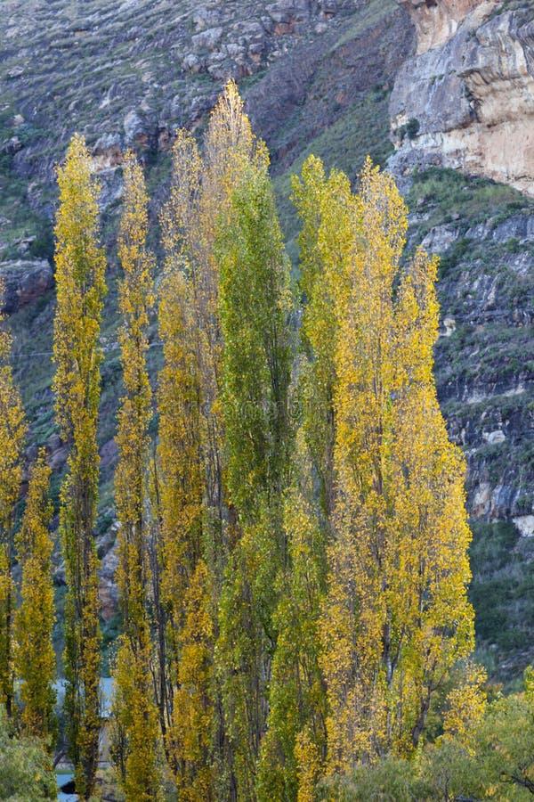 färgade trees för höst royaltyfria foton