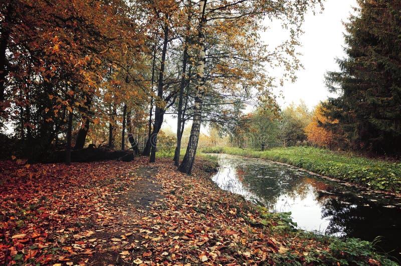 Färgar det mystiska landskapet för hösten i tappning - höstträd och den smala skogfloden i molnigt väder arkivbilder