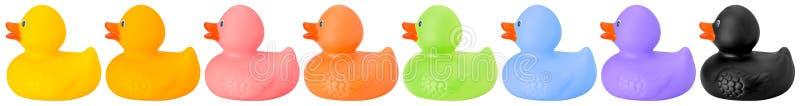 Färgat leksakgummi duckar rätsidan arkivbilder