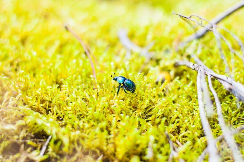 Färgbild, färger, fara som är berusad, Europa, extrem närbild, skog, grön färg, land, Litauen, bottenläge, Macrophotography, Marg fotografering för bildbyråer