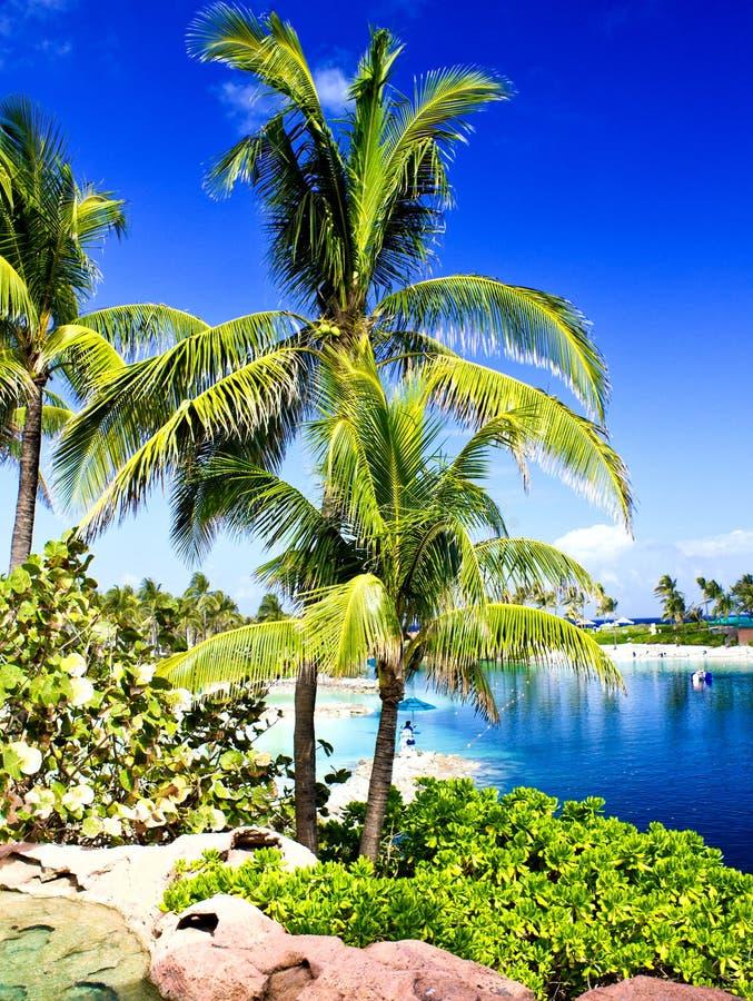 Färger av Nassau, Bahamas royaltyfri bild