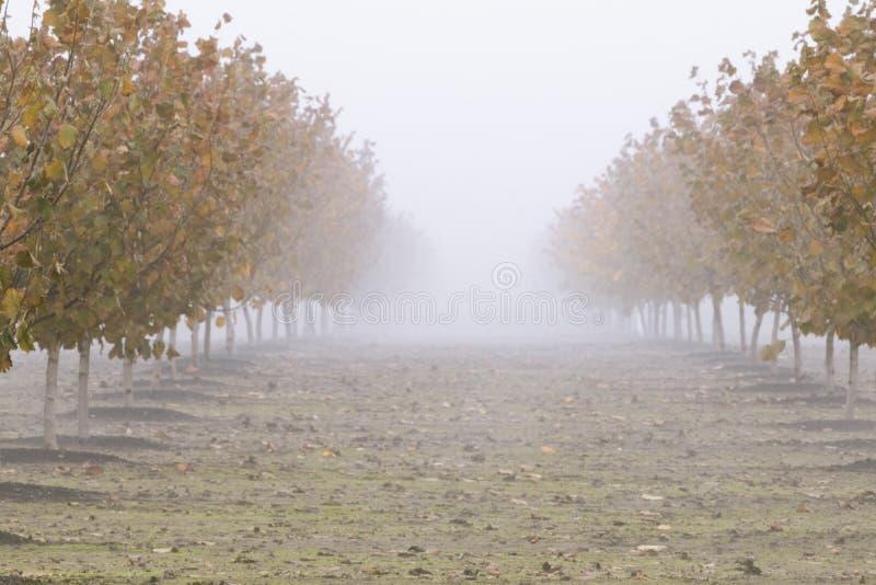 Färger för nedgång för hasselnötfruktträdgård iklädda royaltyfri foto