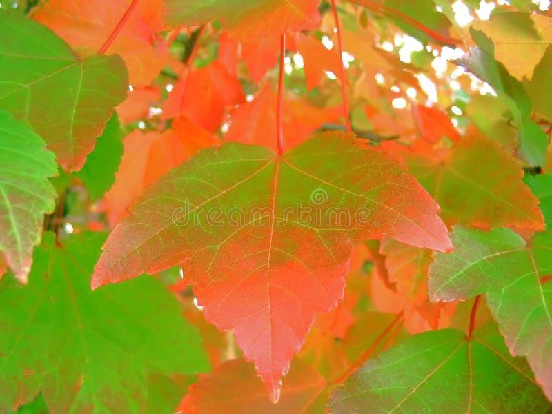 Download Färgfall arkivfoto. Bild av färg, floror, green, leaf, tree - 34674
