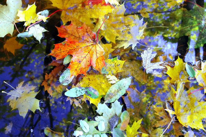 färgfall royaltyfria bilder