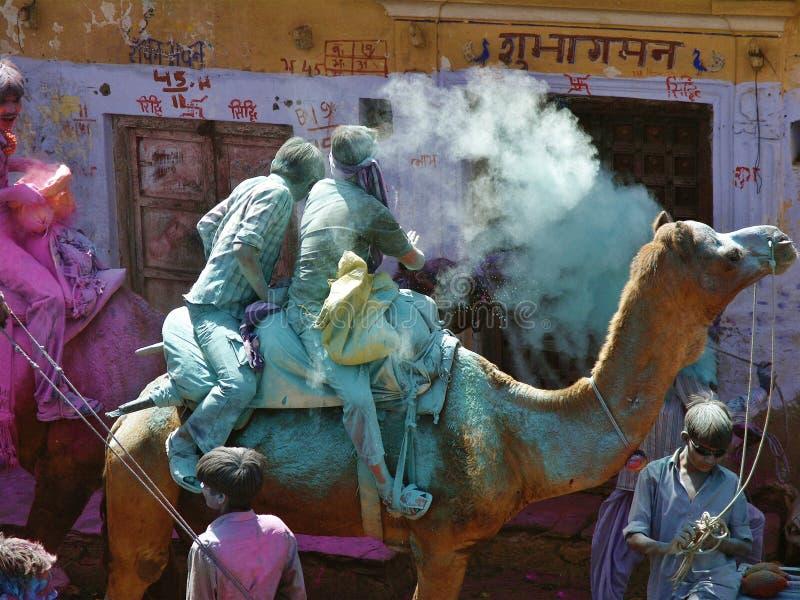 FÄRGFESTIVAL PÅ KAMEL I PUSHKAR RAJASTAN INDIEN royaltyfria bilder