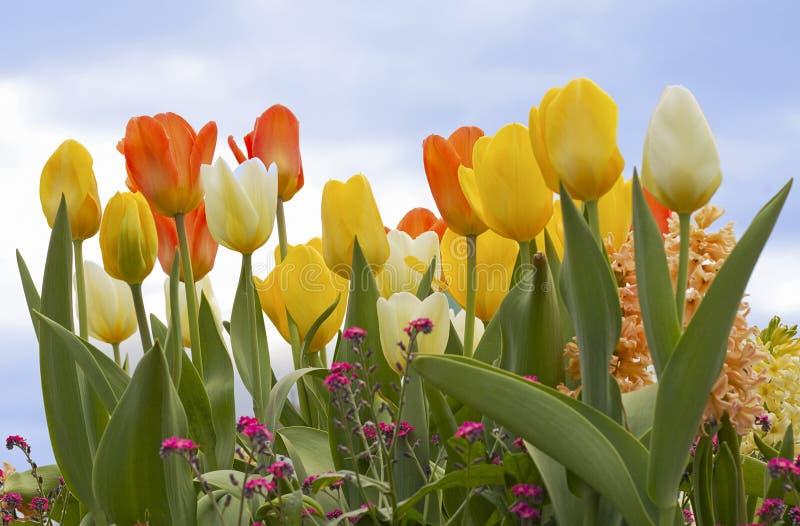 färgglad blommafjäder royaltyfri bild