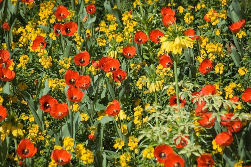 färgglad blomsterrabatt royaltyfria bilder