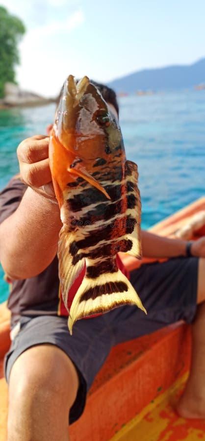 färgglad fiskapelsin royaltyfria foton