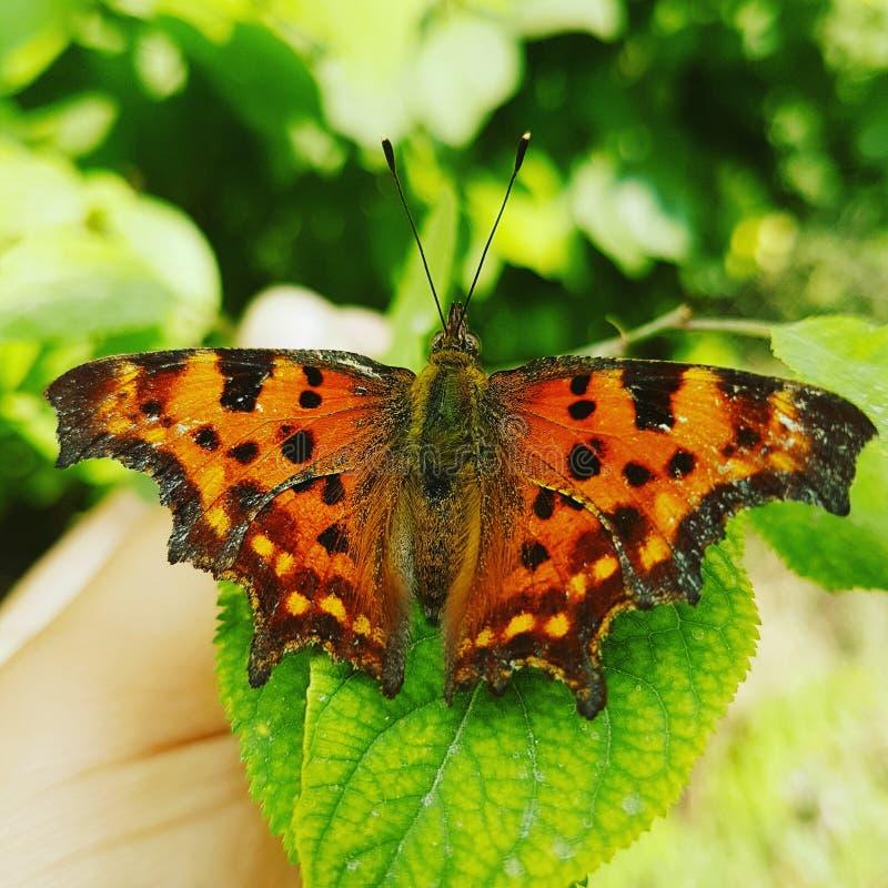 färgglad fjäril arkivbilder