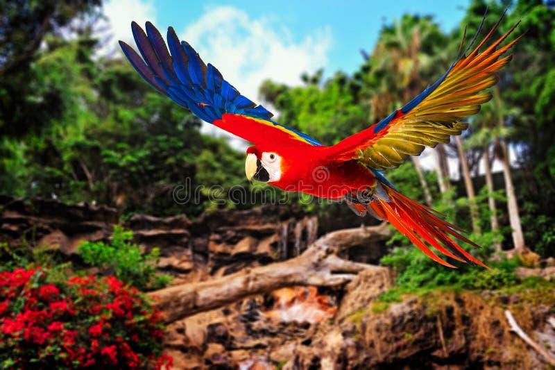 Färgglad flygpapegoja royaltyfri fotografi