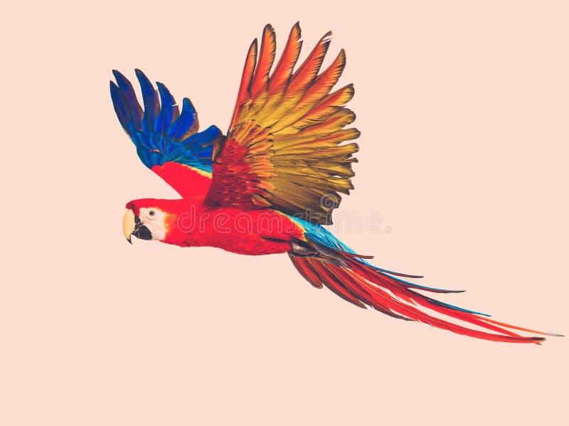Färgglad flygpapegoja royaltyfria foton