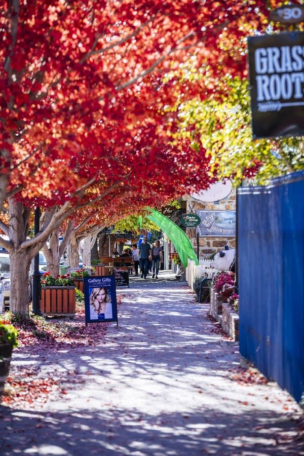 Färgglad höst i Hahndorf Main Street, södra Australien royaltyfria foton