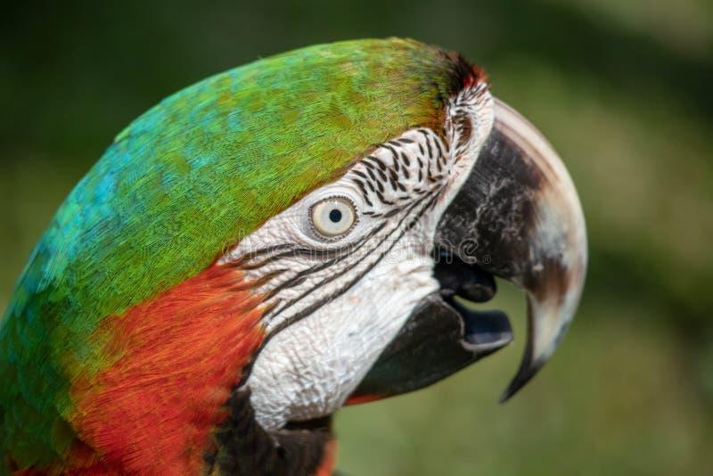 Färgglad stående för dyr och exoitic blandhusdjurara royaltyfria foton