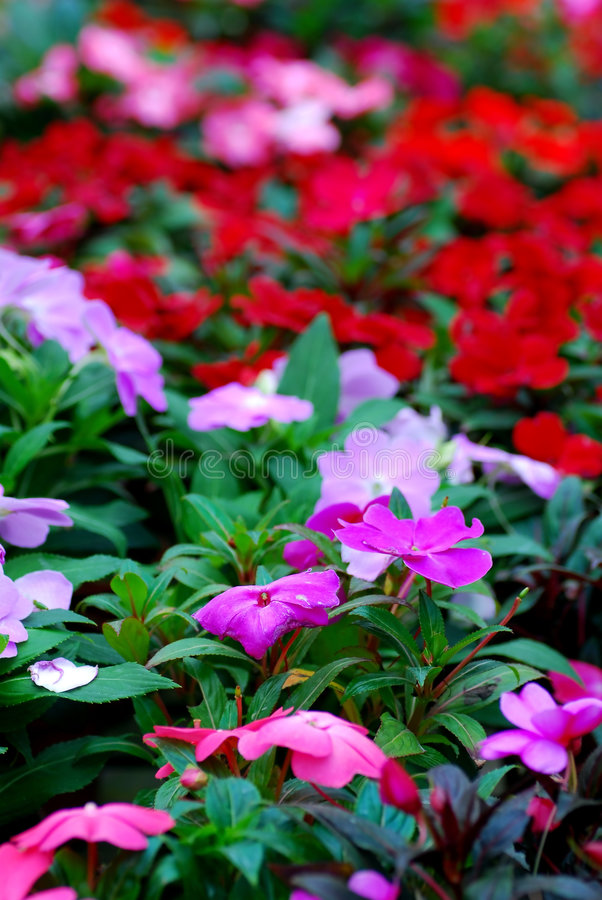 färgglada blommor royaltyfri bild