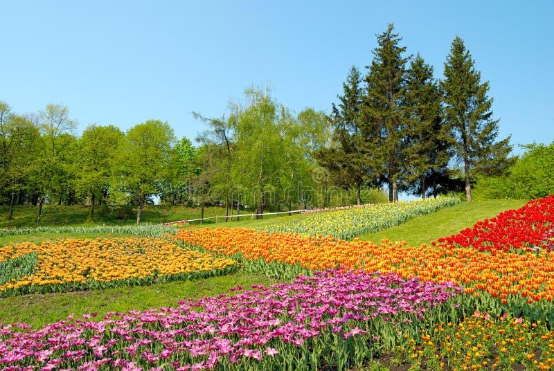 färgglada blommor gräs green fotografering för bildbyråer