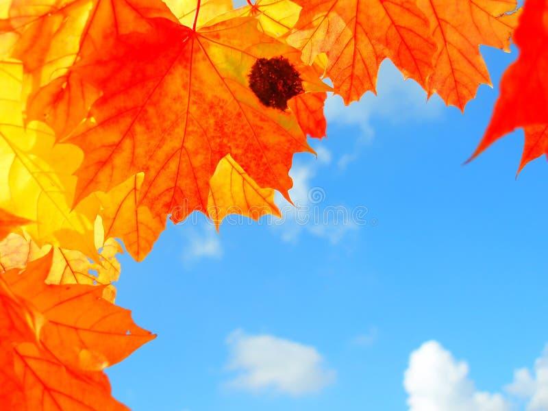färgglada leaves för höst royaltyfri fotografi