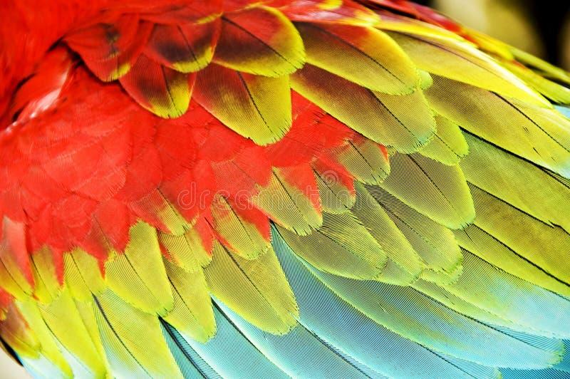 färgglada macawvingar royaltyfri foto