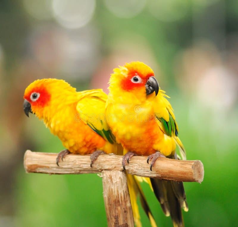 färgglada papegojor royaltyfri fotografi