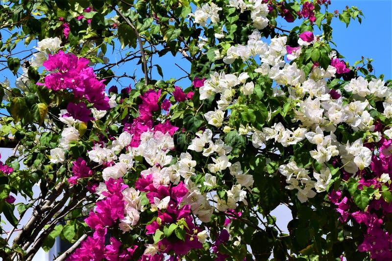 Färgglade blommor av Colombia nära det karibiska havet royaltyfri bild