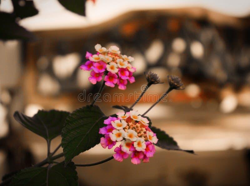 Färgglade blommor med bakgrund 2 royaltyfri fotografi